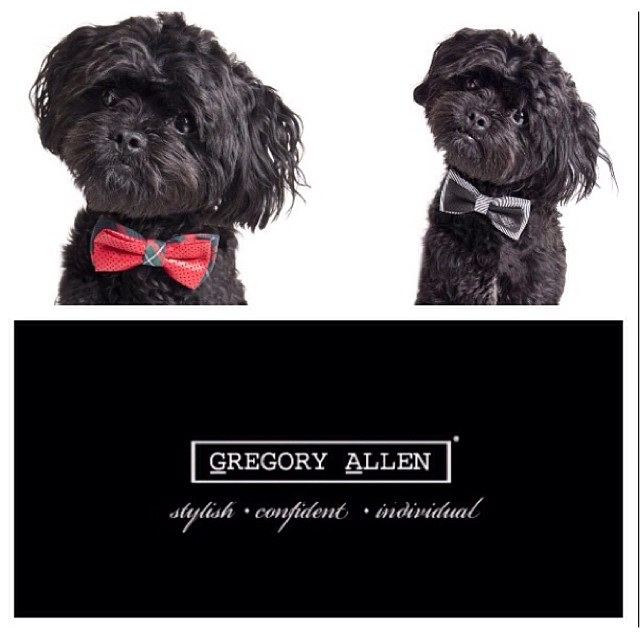 GAC : Limited Edition Holiday Haute Couture bow ties for your stylish pooch www.groovyposhpets.com #GAC #Groovyposhpets – via Instagram